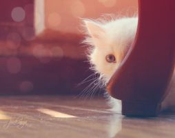one white cat by Pinkninja94