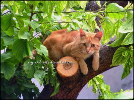 911 by evy-and-cats