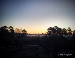 Misty Sunrise Over the Savannah by carolgregoire