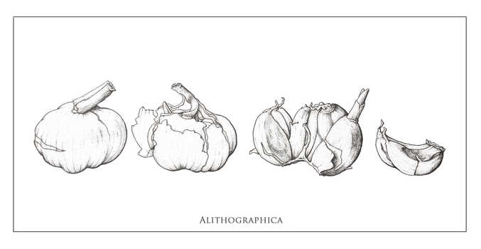 Garlic by Alithographica
