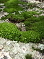 moss stock 01 by hp-abrasion