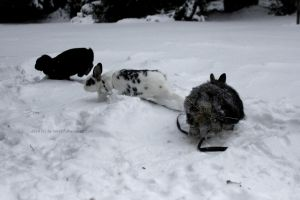 bunny fun in the snow by Leny97