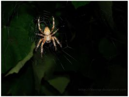 Spider... by DaisSsY