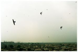 birds over Datong by Gonzale