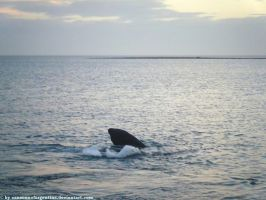 Southern Right Whale VI by Cansounofargentina