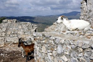 Crusader Castle Goats by amyhooton