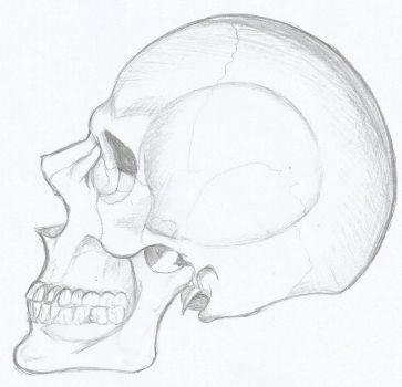 Skull Study by onesmileaday