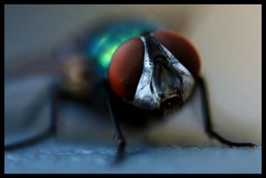 Reverse Lens: Fly by FramedByNature