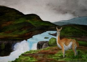 The Lone Guanaco by Bewildermunster