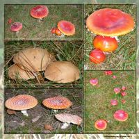 Stock images - Mushroom Collection 04 by M10tje
