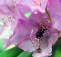 Bee and Flower by Souzay