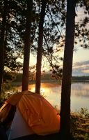 Red Pine Mornings by darkguitar3000