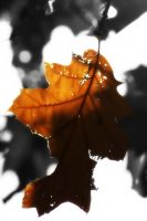 Leaf Halo by AndehDulac
