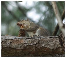 Squirrel and Pincone 1 by texasghost