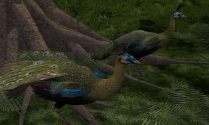 Re-Skinned Indo-Chinese Peafowl by MinxFox