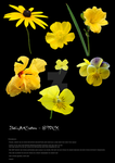 Stock yellow flowers by babsartcreations