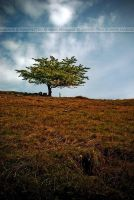Lonely tree 2 by coyote77ro