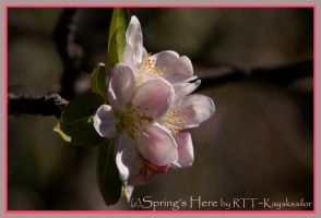 Spring's Here by kayaksailor