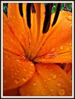 Orange Raindrops by Reilune