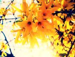 Yellow explosion by meinrasendherz