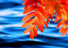 autumn colours by KariLiimatainen