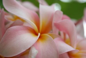 pink flower by mgy-canon