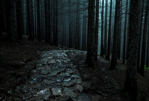 forest path by jacekson