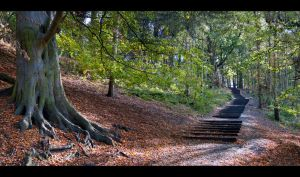 71 Steps by David Nash - Pano by Wayman