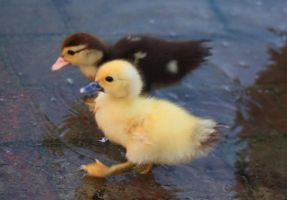 Baby race by RLH-Photography