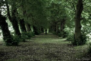 The Beaten Path by MrArtsy