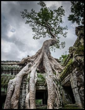Ta Prohm 3 by Dominion-Photography