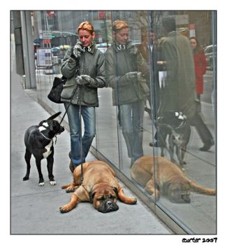 Another Doggone Phone Call by carterr