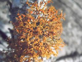 Tree Moss 3 by TheGerm84