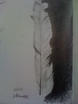 Feather study by SotiriK