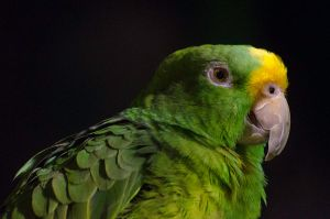 Green Parrot by roarbinson