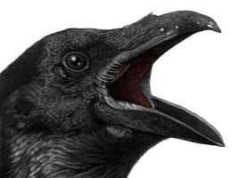 NEVERMORE by jeremyfamir
