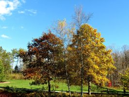 Autumn at the Park by Michies-Photographyy