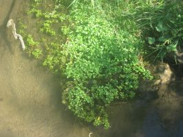 Plants And Creek by byrch
