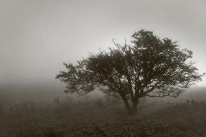 Lone tree in the mist by Shanec86