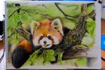 Red Panda Colour Sketch by kiwikid888