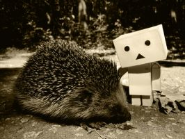 hedgehog and danbo by Zengatsu
