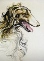 Russian Wolf Hound 2 by HouseofChabrier