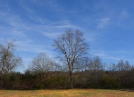 Forest Clearing Landscape Premade Stock DSC 010 by annamae22