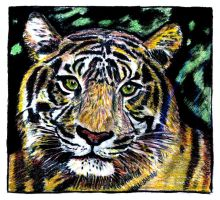 tiger No2 charcoal color by EwaBlackWidowVsHare