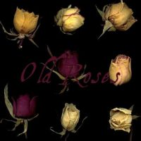 old roses 01-02-03 by ShadyMedusa-stock