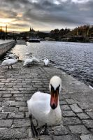 November in Prague by tomsumartin