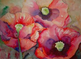 Poppies by p-e-a-k