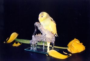 My parrot Lemon on the piano by vanessasan