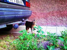 Under the Car by peppy-heppy