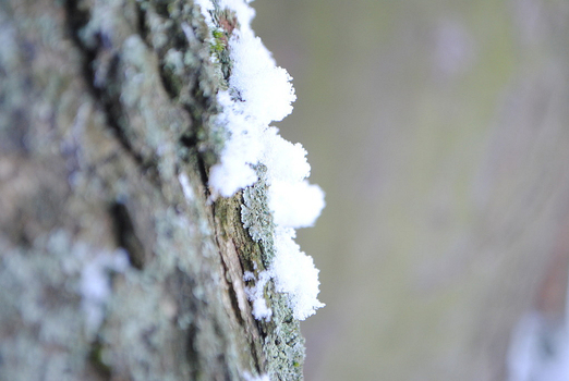 Snow on tree by FreeWorry